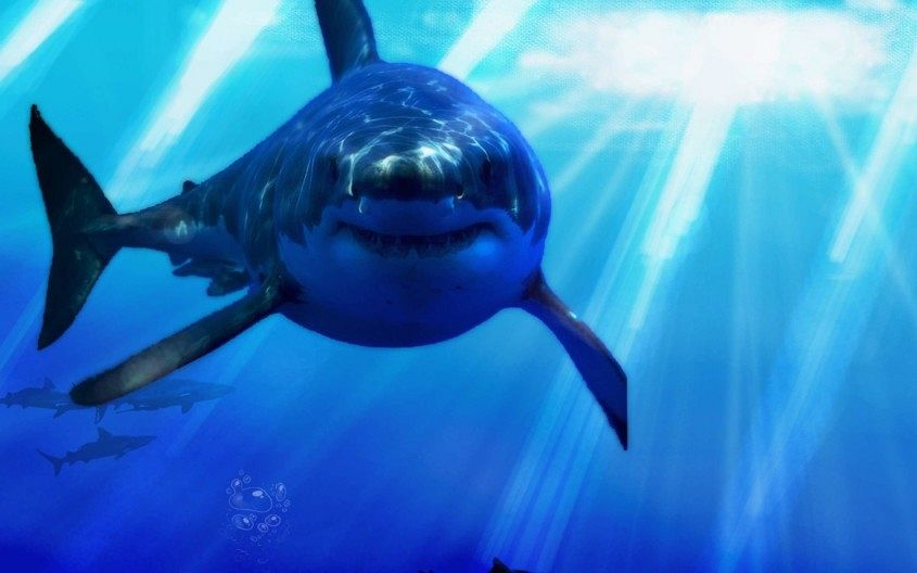Great-White-Shark-Wallpaper-HD-Widescreen