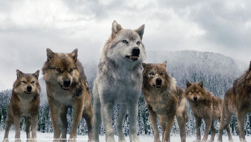 Twilight-werewolf
