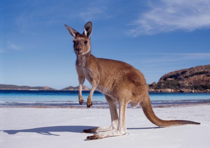 kangaroo-beach